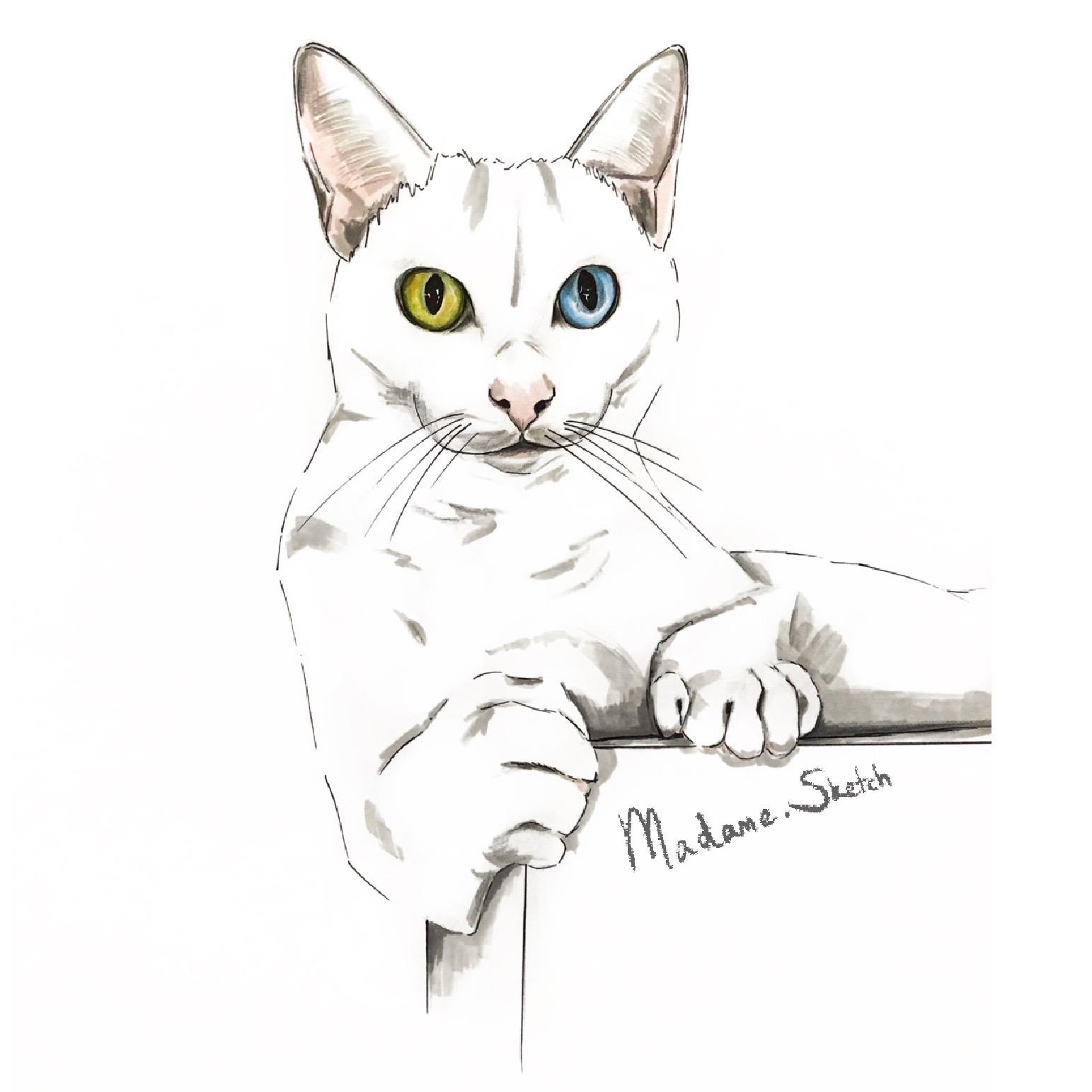 Madame.Sketch.Cat